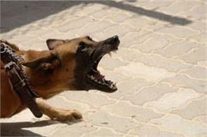 uk dog attacked on  children  mistress gets punishment