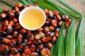 crude palm oil futures down 0 19 percent due to sluggish demand