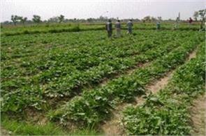 horticulture dept in samba doing good work