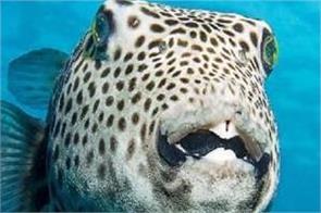 world  s highest heavy fish found
