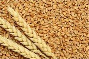wheat futures marginally down