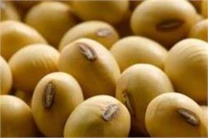 soybean  ncdex