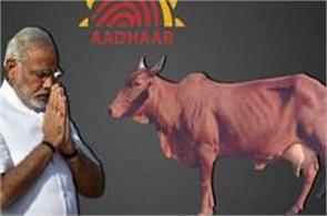 cattle will also be based card