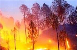new zealand forest fires 1 000 people were rescued