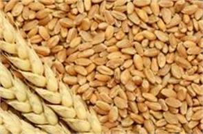 wheat drops on ample stocks  reduced offtake