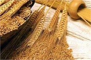 govt fixes wheat procurement target at 33 mln ton for 2017 18