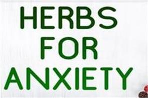 to get relief from anxiety adopt these natural herbs
