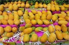 south korea opened the market for indian mango