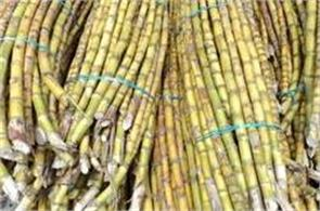 rejected the decision to waive outstanding interest of sugarcane farmers