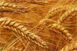 govt considering imposing import duty on wheat  agri secy