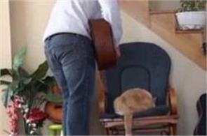 pet cat hoisted out of chair and kicked by owner gets revenge