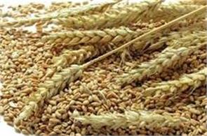 fci begins preparations for wheat procurement