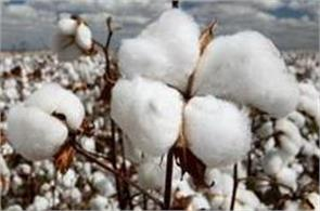multinational companies earn big money from cotton
