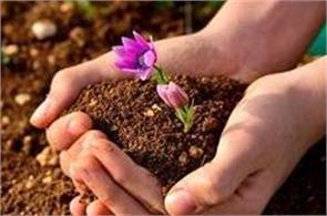 soil can make you desperate king