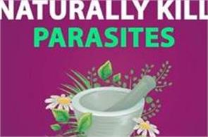 get rid of dangerous parasites adopt these methods
