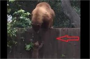 adorable bear cub is left stranded in a backyard in altadena