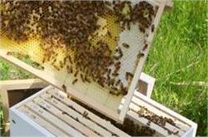 emphasis on beekeeping  to increase the income of farmers