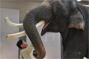 an elephant can talk human language in s korea