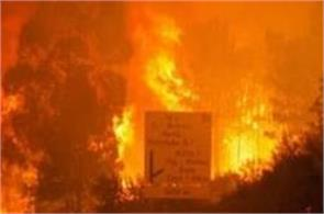 at least 25 killed in portugal forest fire