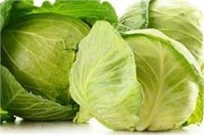 cabbage made in factory by chemicals