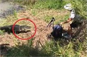 alligator almost gets photographer