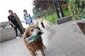 this dog took the initiative to save the   environment