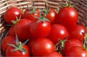 tomatoes can be cheap for next 15 days