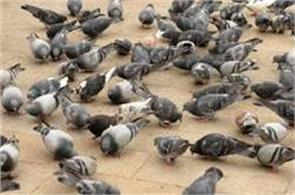 do not do this mistake after feeding the birds