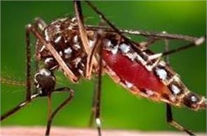 dengue is rising due to air traffic