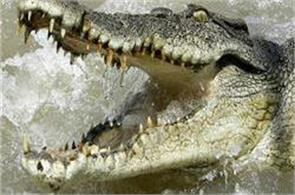 the journalist went to sri lanka to leave  eaten crocodile