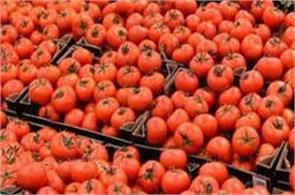 tomatoes will cost rs 300   kg in pak but india will not import