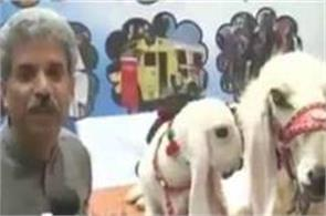pakistani journalist amin hafeez interviews to goats after buffalo