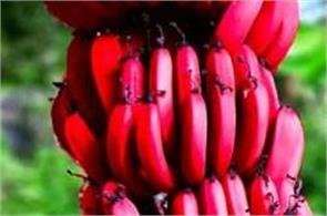 not only yellow there also red and purple banana