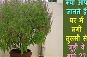 basil plant placed in the house can cause damage instead of benefits