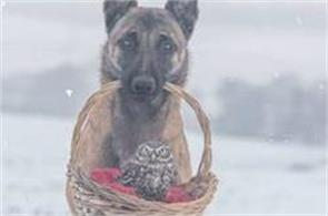 tiny owl needs protection becomes best friends with giant german shepherd