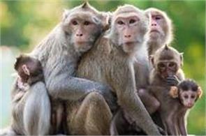 monkeys problem