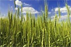 kharif production may fall due to poor monsoon