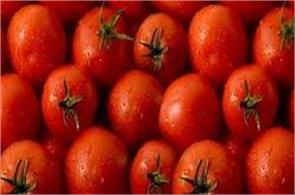 pakistan will not import tomato from india despite rising price minister