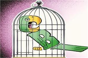 the  cage parrot  of independent authority will continue without cbi