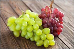 america gives confidence to import fresh grapes from india