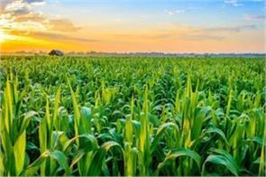 special agricultural export zone will made by government