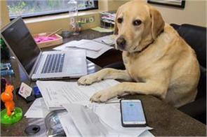 here the pet goes with the owner of the office the reason is very interesting