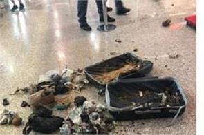 italian police blow up suspicious suitcase containing coconut