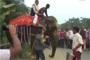 bjp legislator who reached the reception at the elephant fell from