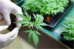 russia opposes the decision to legalize cannabis