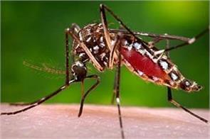 dengue cases in rs pura jammu