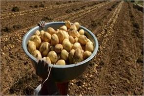 potato expensive from speculative business