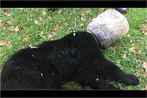 head of the bears kidnapped for 3 days in plastic jar see video
