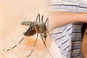 massive expansion of dengue patients in mansa