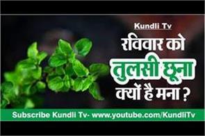why tulsi is not allowed to touch on sunday